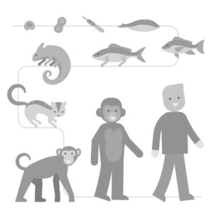 illustraties-vooruitkijkenvoorvergevorderden-11